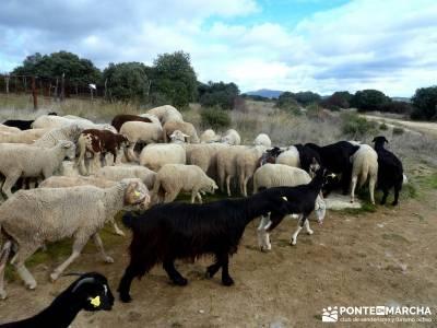 Puentes Medievales Río Manzanares; viajes organizados a asturias valdemaqueda rutas senderismo sier
